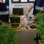 COLTIVAVA IN CASA PIANTE DI MARIJUANA, ARRESTATO